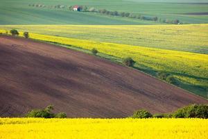 idyllische kleurrijke velden landschap - platteland heuvels foto
