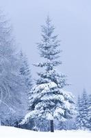winter bossen foto