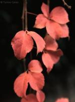 bladeren in de winter foto