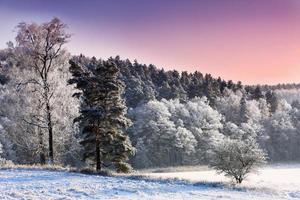 winter in warmia foto