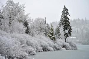 winter op het meer foto