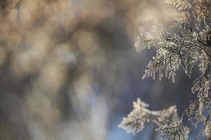 winter kader. bevroren boomtak foto