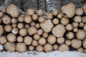 Duitsland, boomstammen in de winter