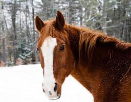 winter paard foto