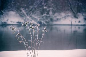 sneeuw en winter. Wit-Rusland dorp, platteland in de winter foto
