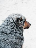 zwerfhond. winter. foto