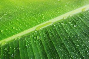 banan blad