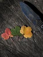 herfst foto