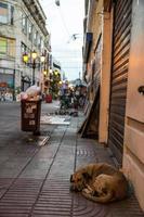 Santo Domingo-hond foto