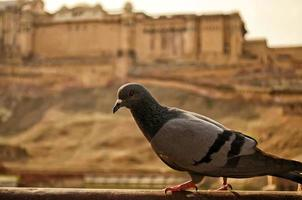 amer plaats of amber fort foto