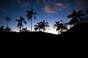 palmbomen, silhouet, caraça