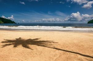 maracas baai trinidad en tobago strand palmboom schaduw scherp foto