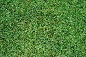 groen gras als achtergrond en textuur foto