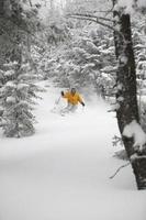 expert skiër poedersneeuw in Stowe, Vermont, VS.