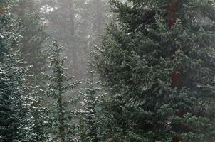 Colorado bos sneeuw groene pijnboom Breckenridge Colorado foto