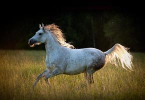 lopend paard foto