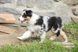 prachtige puppy rennen foto