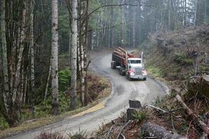 houtvrachtwagen in bos foto
