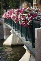 bloemen op brug