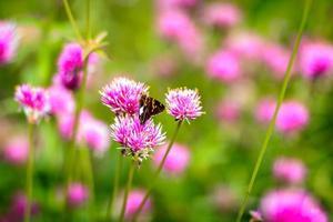 vlinder en bloemen