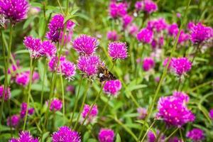 vlinder en bloemen foto