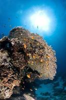 recif corallien, sous l'eau, corail, poisson, monde marin foto