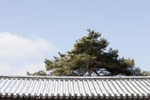 dak; sneeuw; pijnboom; foto