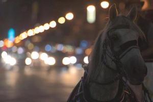paard getrokken foto