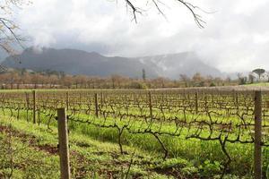wijngaarden in de zon