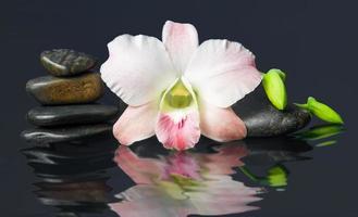 orchis en hete stenen wellness- en spa-afbeelding, donkere achtergrond foto