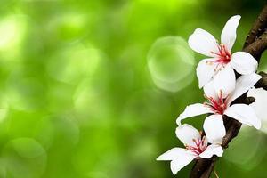 prachtige tung bloemen foto