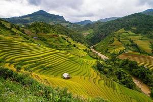 rijstterrassen in Vietnam