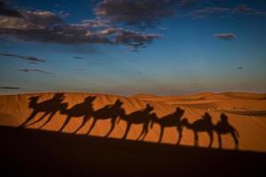 kamelen schaduwen foto
