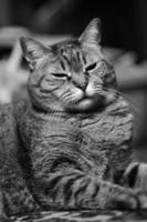 zwart-witte kat foto
