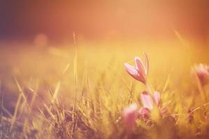zonsondergang bloem foto