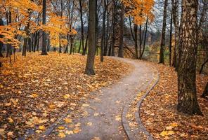 esdoorn herfst foto