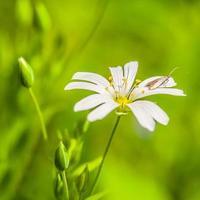 lente achtergrond met bloem en mooie bokeh foto