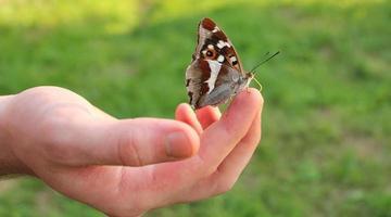 vlinder op vinger foto
