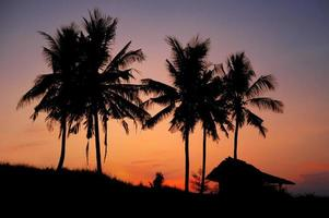 zonsondergang en palm foto
