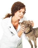vrouwelijke dierenarts die een kleine hond onderzoekt foto