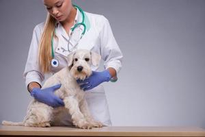 vrouwelijke dierenarts onderzoekt hondje met stethoscoop foto