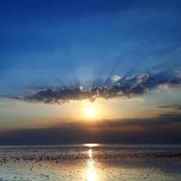 zonsondergang over zeemeeuw foto