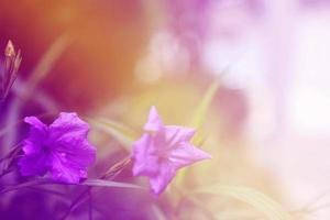 bloem achtergrond. mooie bloemen foto