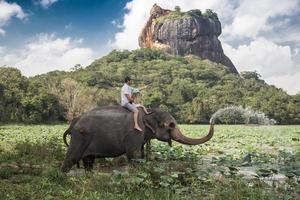 olifant rijden foto