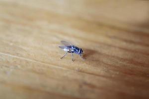 vliegen op een tafel. foto
