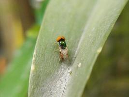 kleine vlieg op groene bladeren foto