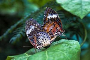 vlinder vliegen in de ochtend de natuur foto