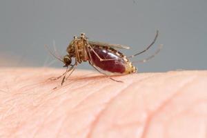 mug zuigen bloed foto