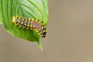 worm op groen blad foto
