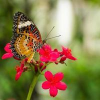 vlinder en bloem foto